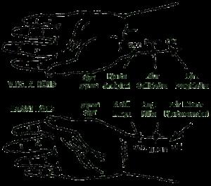 pulsar_hendur_2